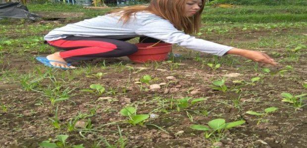 Dessy Ratika Putri (Mahasiswa Universitas Boyolali):  Kuliah di Pertanian, Mengapa Tidak???