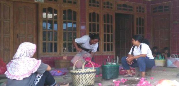 YOGA SETYO UTOMO, MAHASISWA UNIVERSITAS BOYOLALI : BUNGA MAWAR KOMODITAS UTAMA LERENG MERAPI YANG TERPINGGIRKAN.